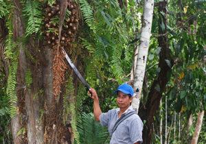 Belize rainforest tour