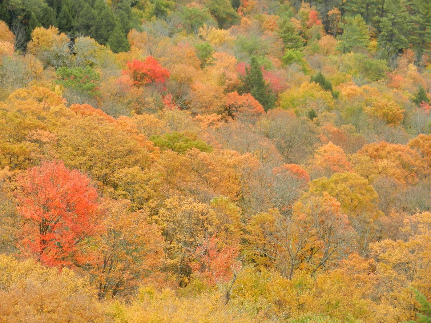 vermont fall foliage walking tours 15