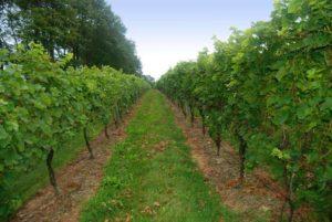 Coastal New England wine bike tour